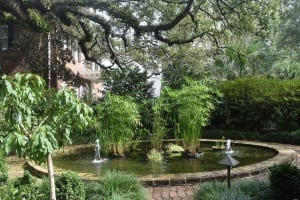 Tree over fountain